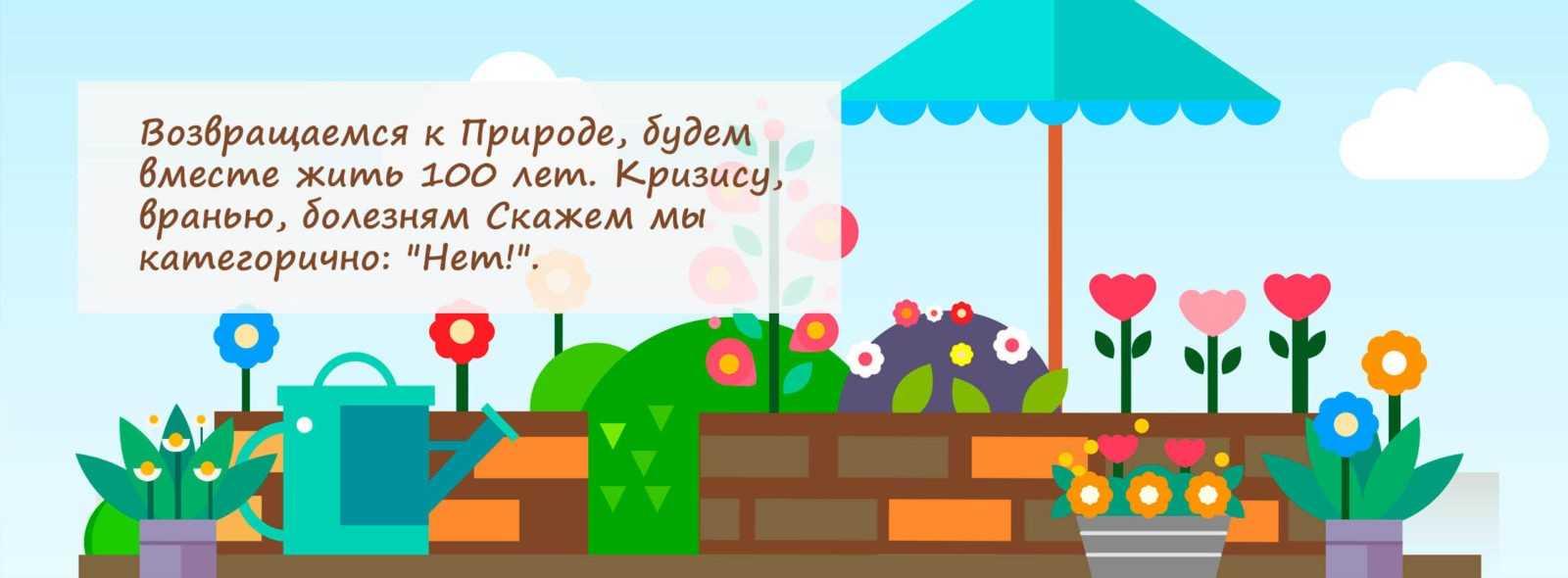 Рассада в Петербурге