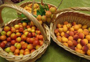 подарки абрикосового дерева
