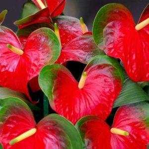 Комнатные цветы семена