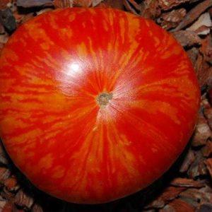 томат фейерверк