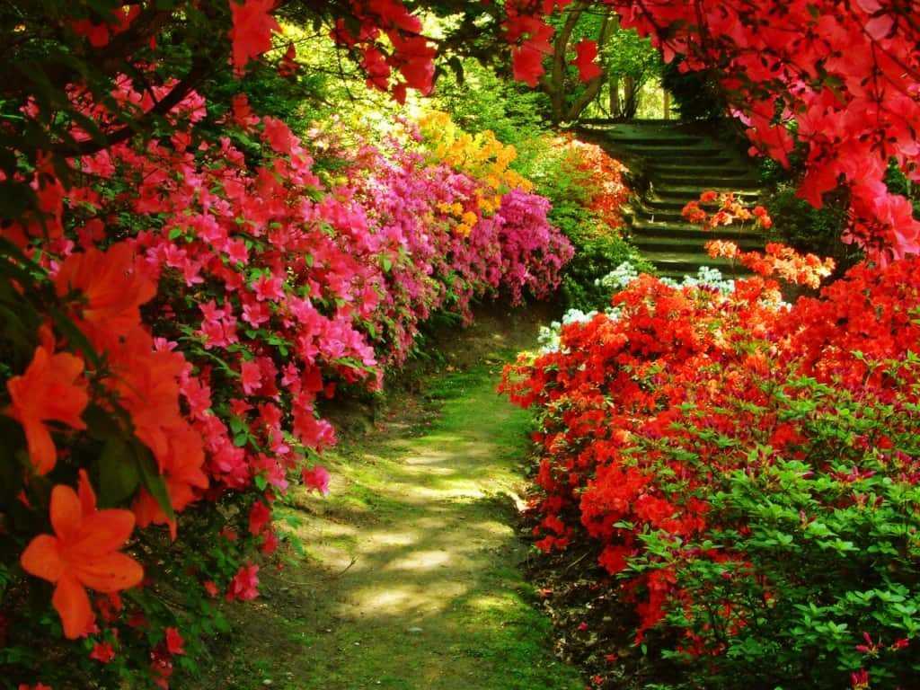 садовый ландшафтный дизайн