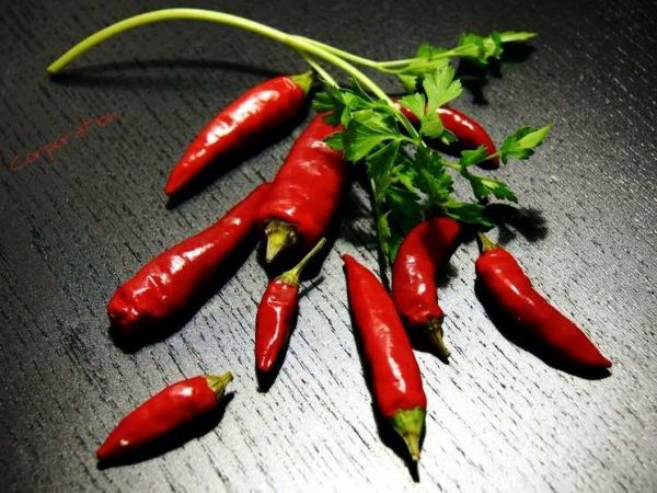 перец табаско семена
