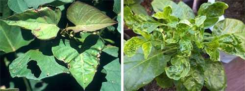 признаки голодания растений