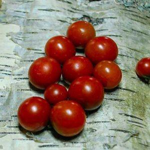 томат черный мэтта