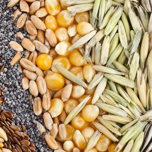 А - Семена: Овощей, Комнатных Цветов, Кустарников, Декоративных и Плодовых