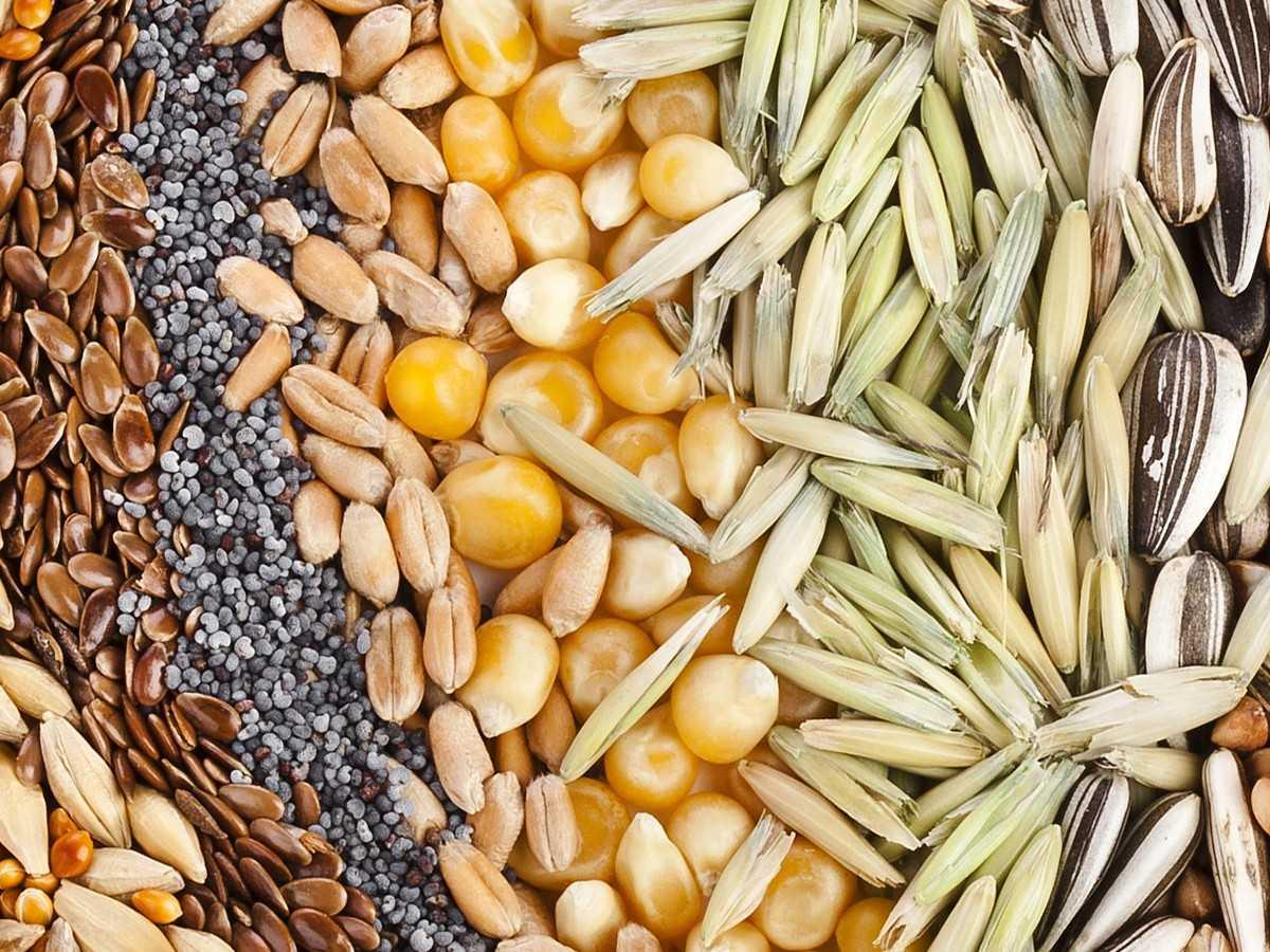 во сколько появляется семя