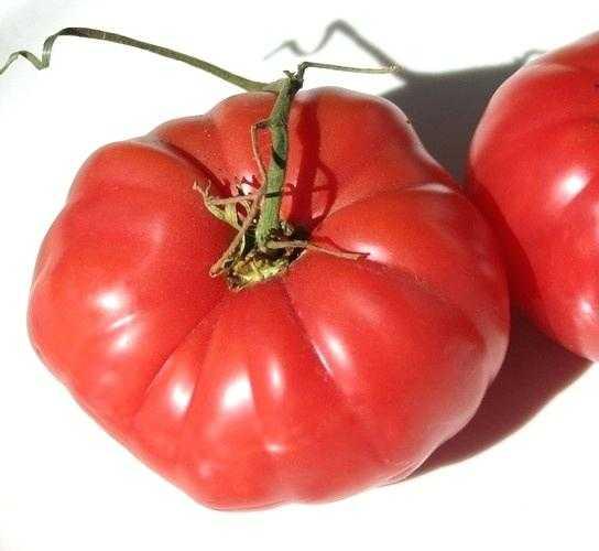 ноги мышцы томат кубышка отзывы и фото временем