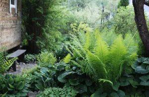 неприхотливые растения для сада