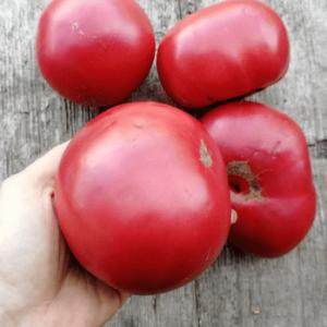 Семена Томата Исполин Малиновый. Купить с доставкой по РФ почтой