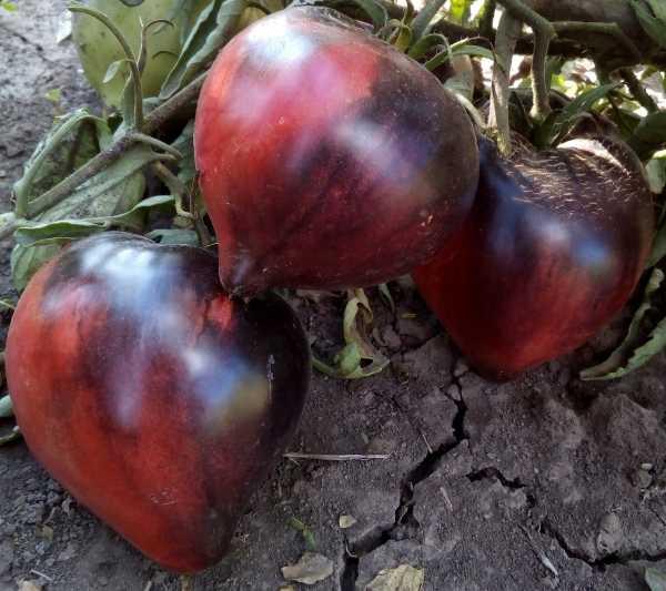 семена для рассады чеснока купить спб